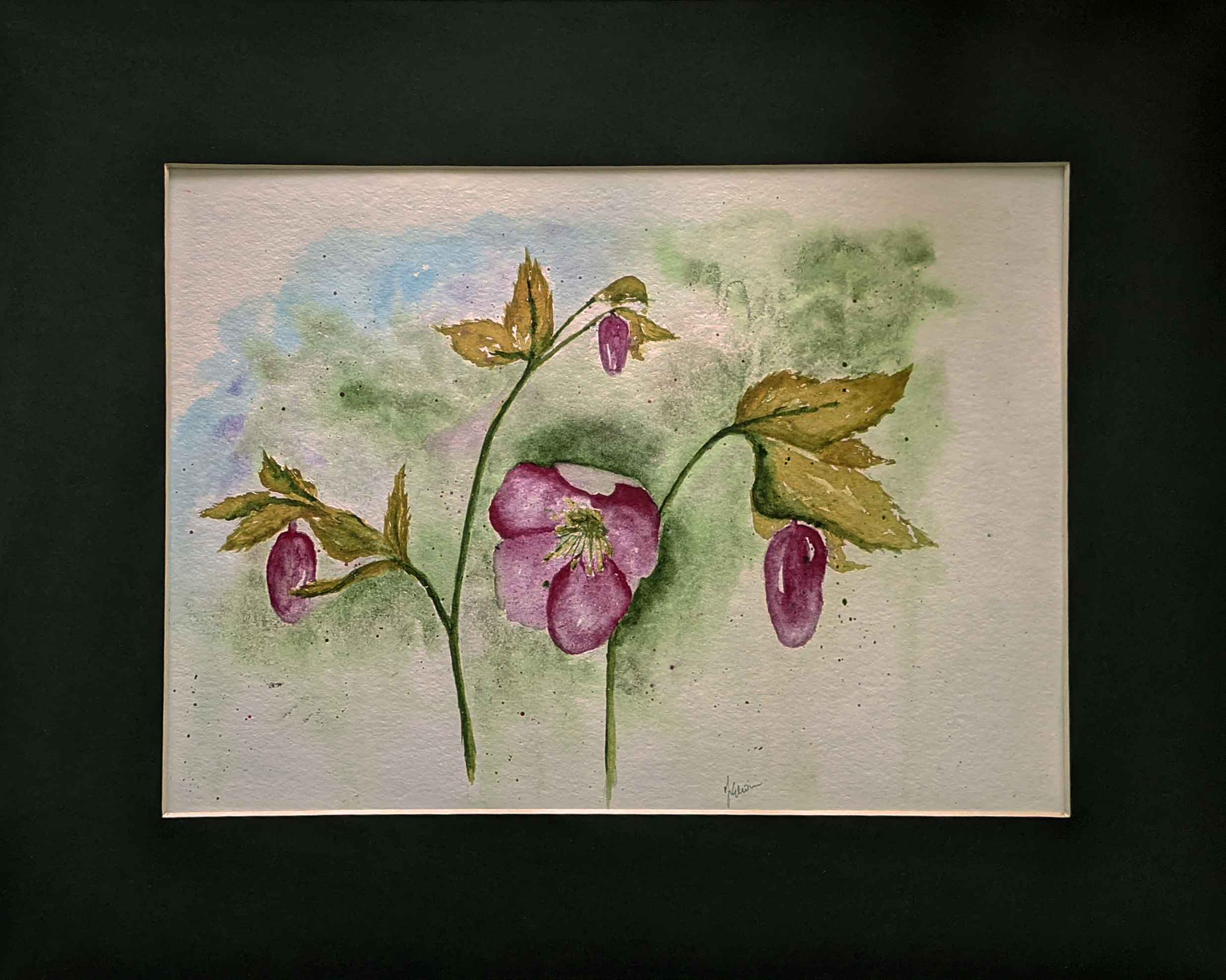 hellebores watercolour painting